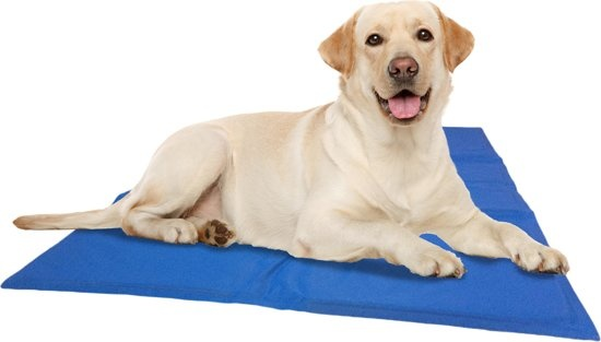 Hittegolf? Tips voor tegengaan oververhitting van je hond.