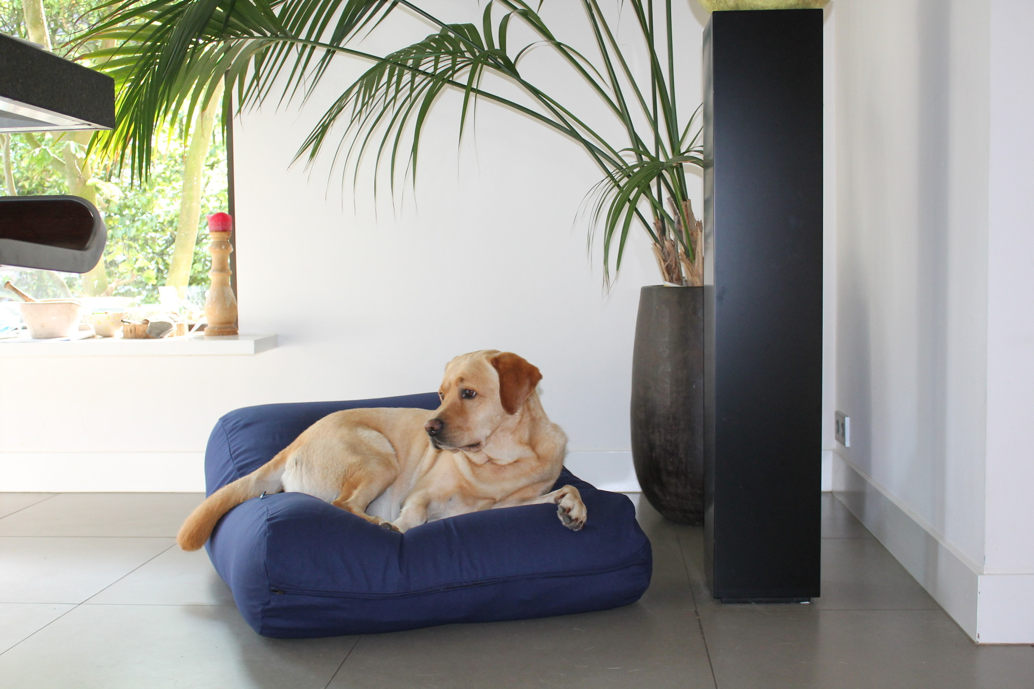 Dogs Companion® Hondenbed donkerblauw large