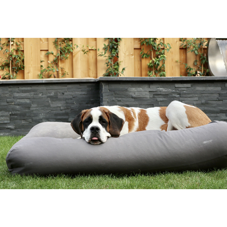 Dog's Companion® Hondenkussen muisgrijs superlarge