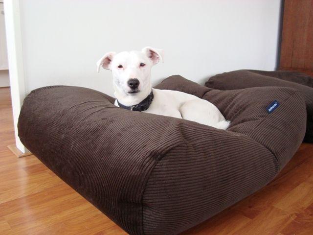 Dog's Companion® Hondenbed chocolade bruin ribcord large
