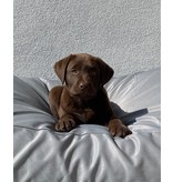 Dog's Companion® Hondenbed lichtgrijs vuilafstotende coating