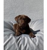 Dog's Companion® Hondenbed lichtgrijs vuilafstotende coating Large