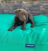 Dog's Companion® Hondenbed lentegroen vuilafstotende coating small