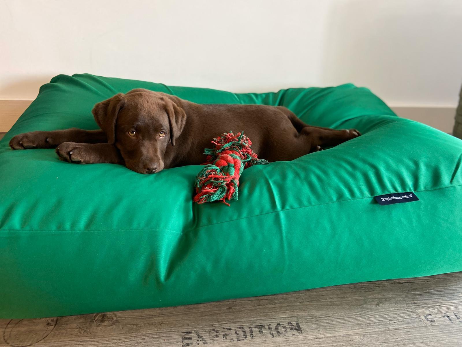 Dog's Companion® Hondenbed lentegroen vuilafstotende coating superlarge