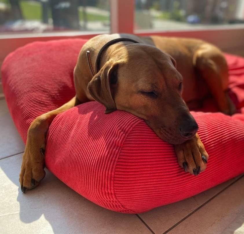 Dog's Companion® Hondenbed rood ribcord small