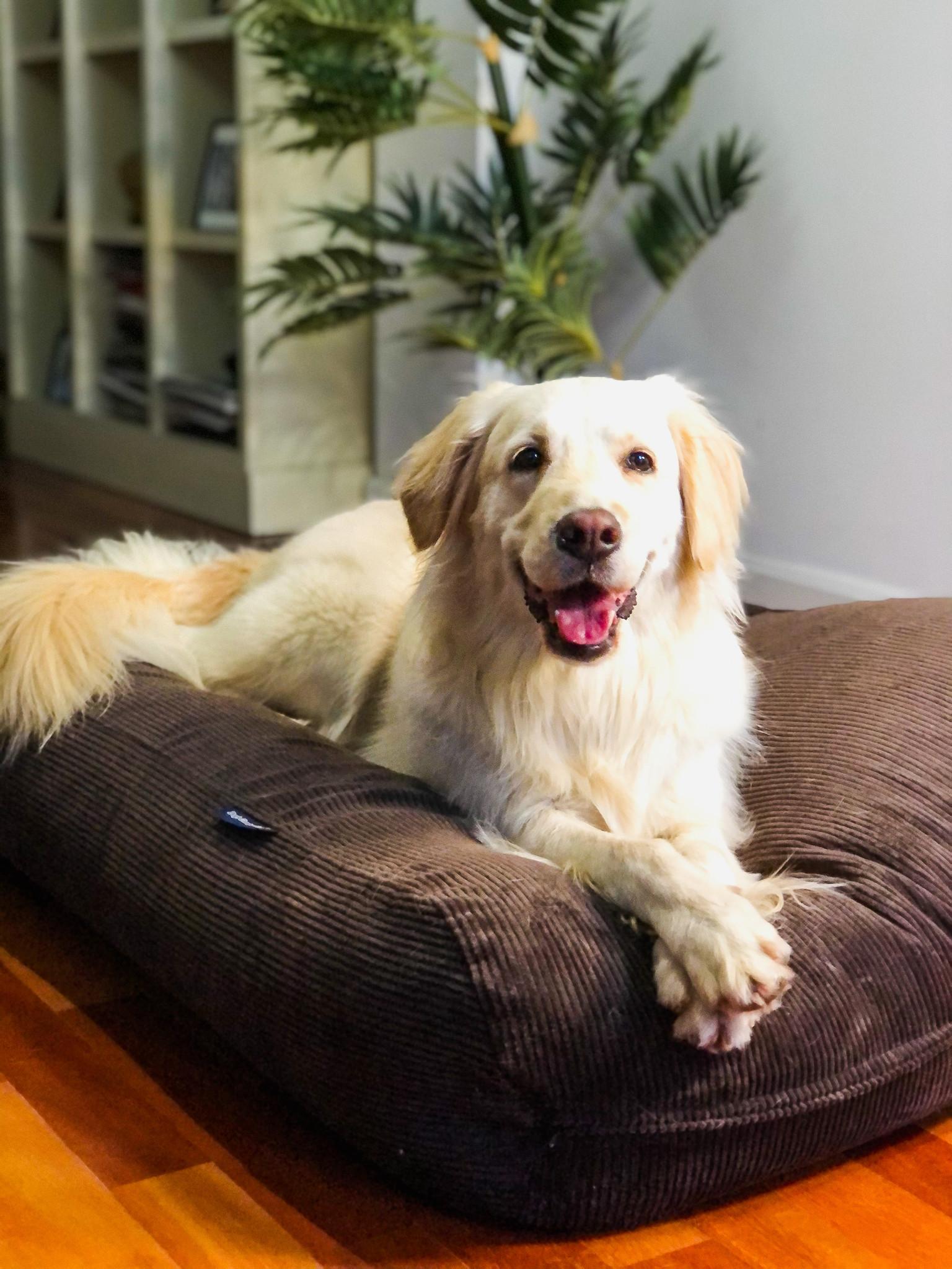 Dog's Companion® Hondenbed chocolade bruin ribcord medium