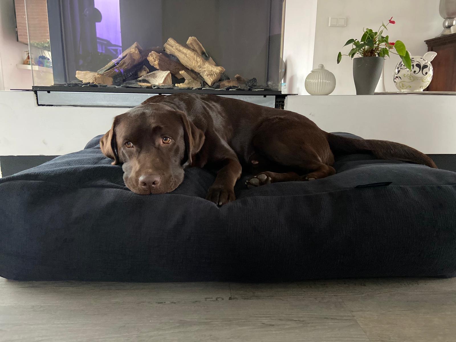 Dog's Companion® Hondenbed Dark Steel Bouclé