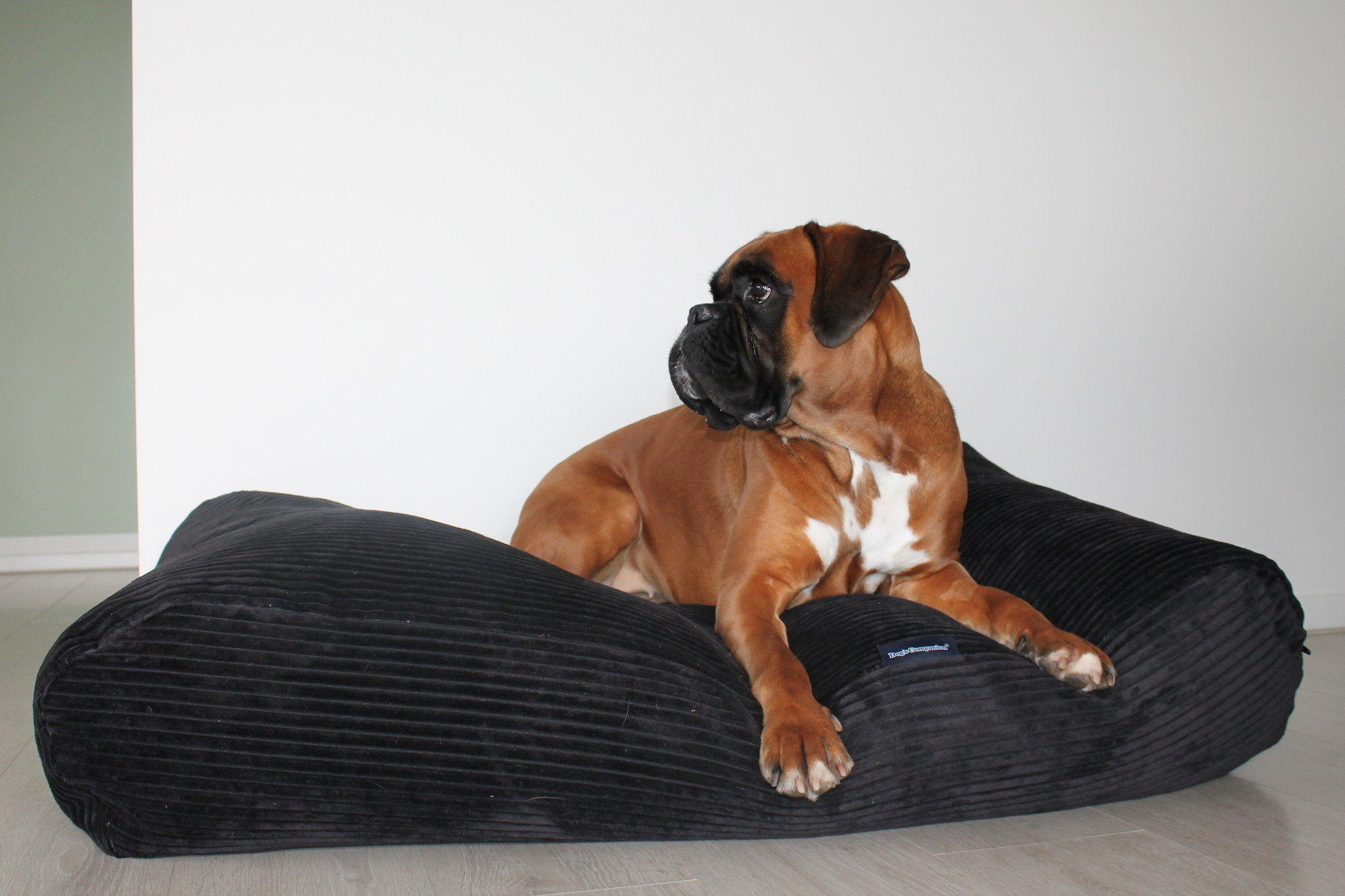 Dog's Companion® Pre-order! Hondenbed Black giant ribcord