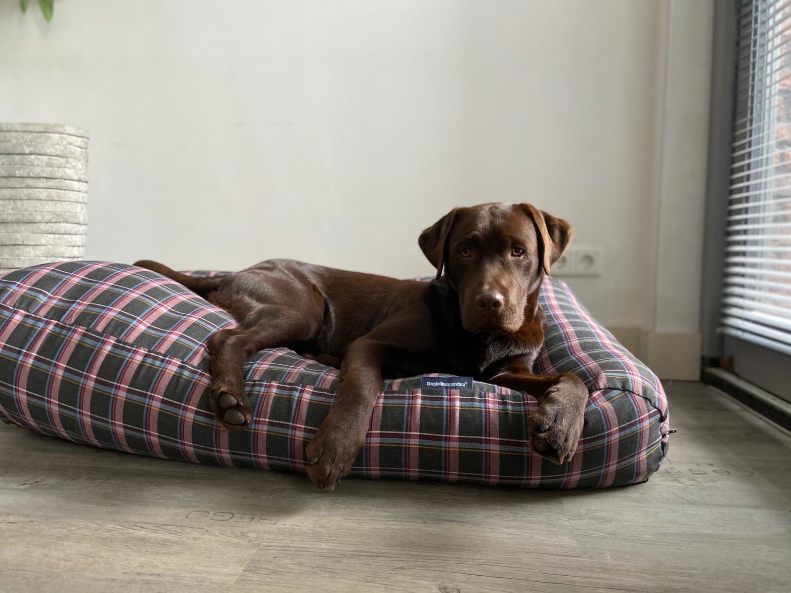 Dogs Companion® Hondenbed MacIntyre Small