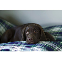 Hondenbed Dress Gordon