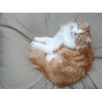 Kattenkussen beige 55 x 45 cm