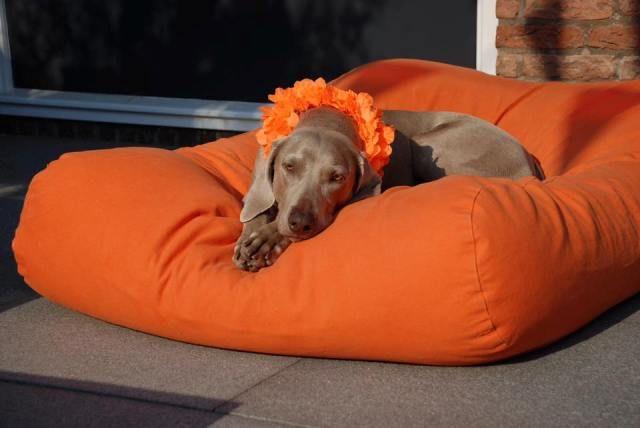 Dogs Companion® Hondenbed oranje medium