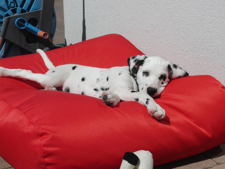 Op vakantie met de hond - wat neem ik allemaal mee?