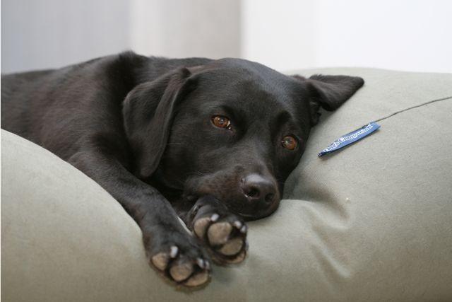 Dierendag cadeau inspiratie voor je hond
