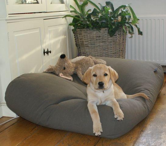 Dog's Companion® Hondenkussen muisgrijs