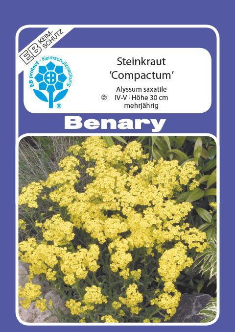Benary Steinkraut Compactum, mehrjährig