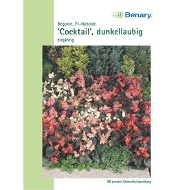 Benary Begonien Cocktail® F1, einjährig