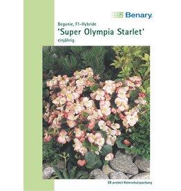 Benary Begonien Super Olympia® F1 Starlet®, einjährig