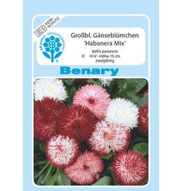 Benary Gänseblümchen Habanera® Mix, zweijährig
