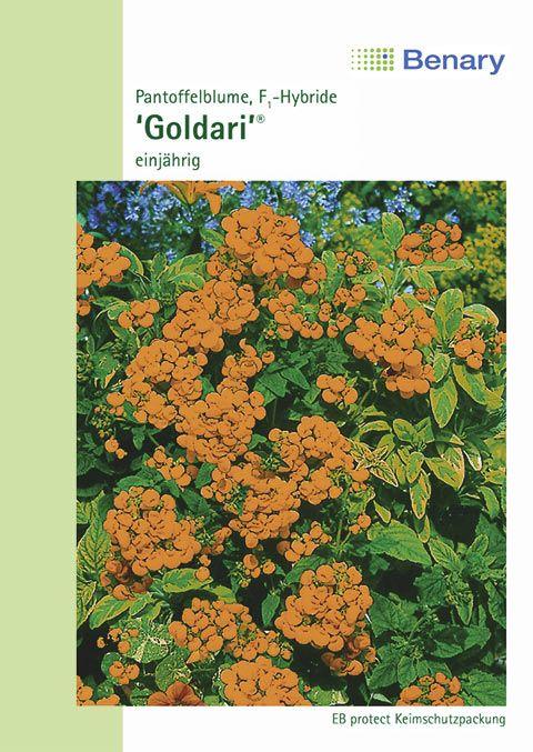 Benary Pantoffelblume Goldari® F1, einjährig