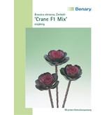 Benary Zierkohl Crane F1 Mix, einjährig