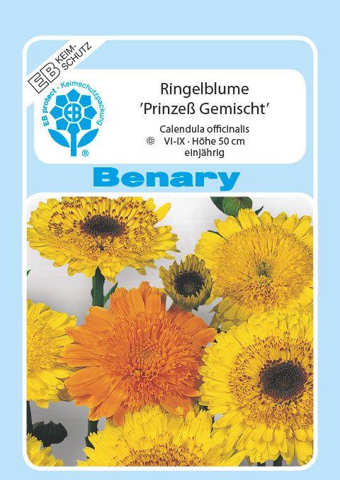 Benary Ringelblume Prinzeß Mix, einjährig