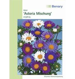 Benary Aster Astoria Mix, einjährig