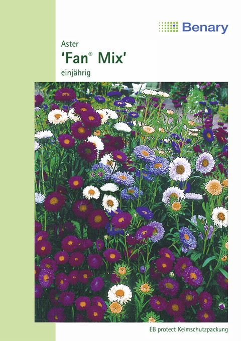 Benary Aster Fan® Mix, einjährig