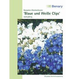 Benary Karpaten-Glockenblume Blaue und Weiße Clips®, mehrjährig