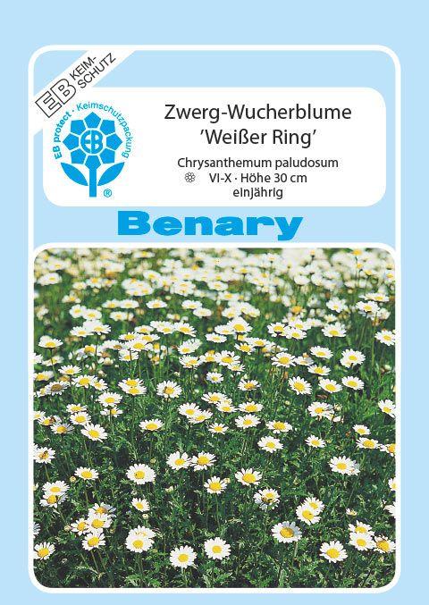 Benary Zwerg-Wucherblume Weißer Ring, einjährig