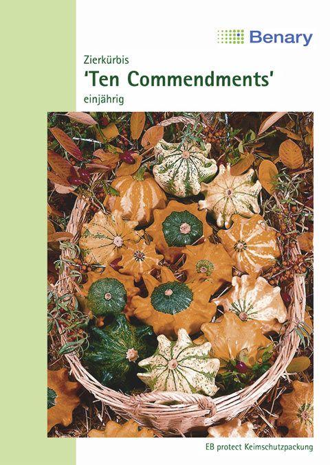 Benary Zierkürbis Ten Commendments, einjährig
