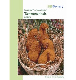 Benary Zierkürbis Schwanenhals, einjährig