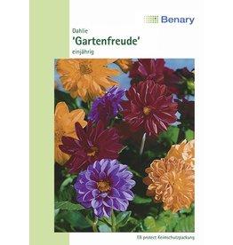 Benary Dahlie Gartenfreude®, einjährig