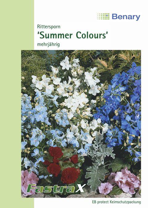 Benary Rittersporn Summer Colours, mehrjährig