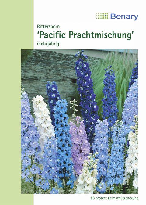 Benary Rittersporn Pacific Prachtmischung, einjährig