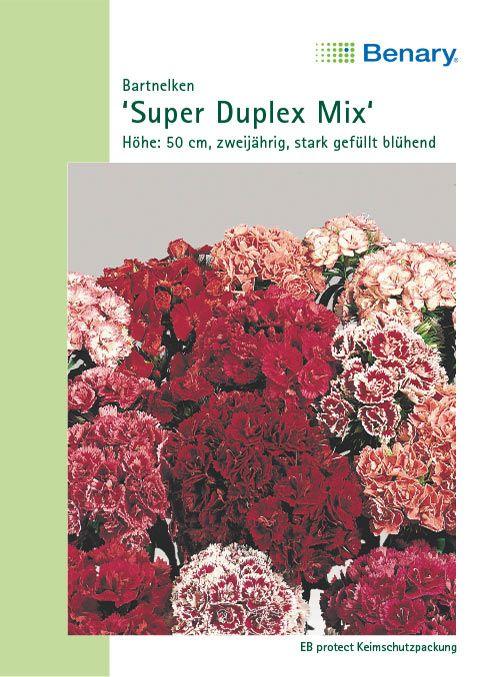 Benary Bartnelken Super Duplex Mix, zweijährig