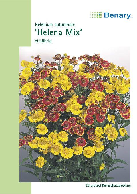 Benary Sonnenbraut Helena Mix, einjährig