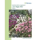 Benary Kugelamarant Las Vegas Mix, einjährig