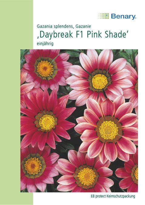 Benary Gazanie Daybreak F1 Pink Shade, einjährig