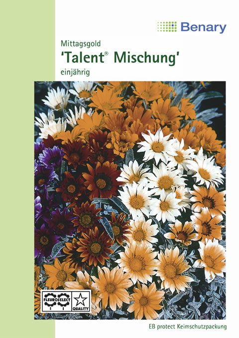 Benary Mittagsgold Talent® Mix, einjährig
