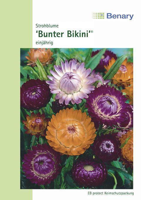 Benary Strohblume Bunter Bikini®, einjährig