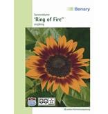 Benary Sonnenblume Ring of Fire, einjährig