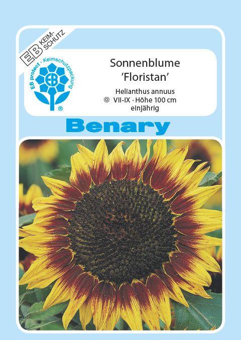 Benary Sonnenblume Floristan®, einjährig