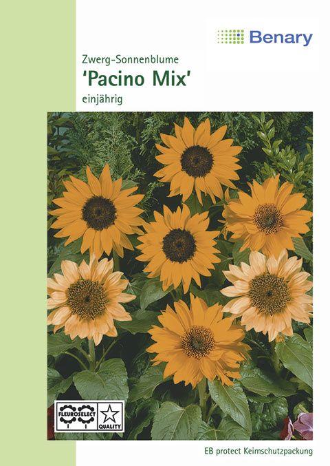 Benary Zwerg-Sonnenblume Pacino® Mix, einjährig