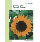 Benary Sonnenblume Sunrich Orange, einjährig