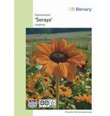 Benary Sonnenblume Soraya, einjährig