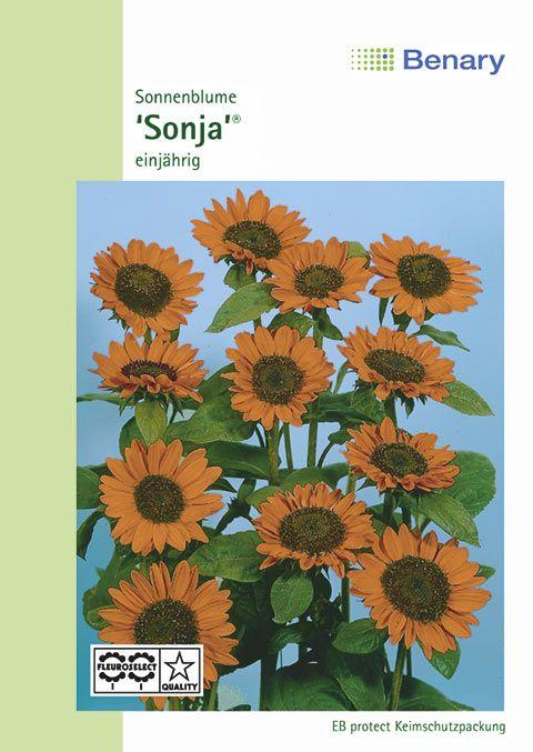 Benary Sonnenblume Sonja®, einjährig