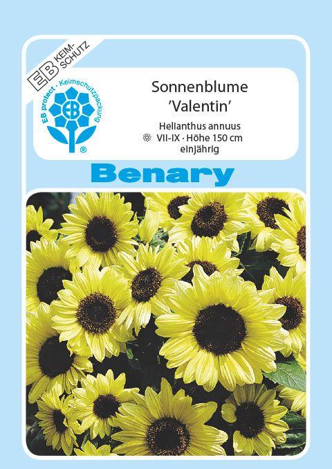 Benary Sonnenblume Valentin®, einjährig