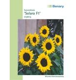 Benary Sonnenblume Solara F1, einjährig