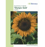 Benary Sonnenblume Olympic Gold F1, einjährig